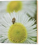 Bugged Flower Wood Print