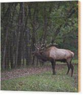 Bull Elk Bugle Wood Print