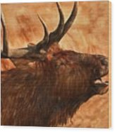 Bugling Bull Elk Autumn Background Wood Print