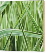 Bug's Eye View Wood Print