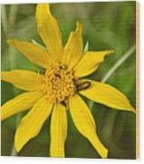 Bugs Paradise Wood Print