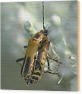 Bugz In Spring Wood Print