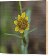 Build Me Up, Buttercup Wood Print