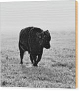 Bull After Ice Storm Wood Print