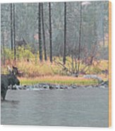 Bull And Cow Moose In East Rosebud Lake Montana Wood Print