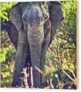 Bull Elephant Threat Wood Print