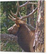 Bull Elk 2 Wood Print