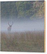 Bull Elk Disappearing In Fog - September 30 2016 Wood Print