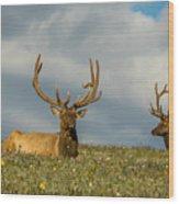 Bull Elk Friends For Now Wood Print