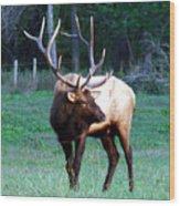 Bull Elk II Wood Print