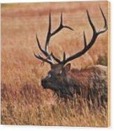 Bull Elk In A Field Wood Print