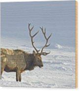 Bull Elk In Snow Wood Print