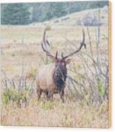 Bull Elk In The Rain Wood Print