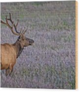 Bull Elk In Velvet Wood Print