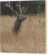 Bull Elk In Yellowstone Wood Print