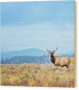Bull Elk Meadow Wood Print