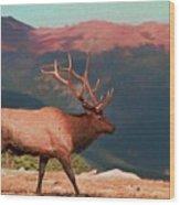 Bull Elk On Trail Ridge Road Wood Print
