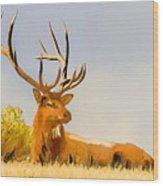 Bull Elk Resting In The Grass Wood Print
