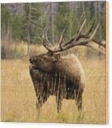 Bull Elk Sideview Wood Print