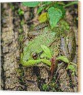 Bull Frog On A Log Wood Print