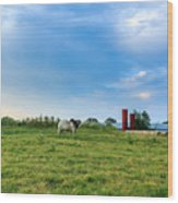 Bull In An East Texas Field Wood Print