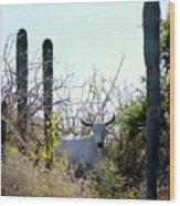Bull In The Desert Of Mexico Wood Print