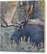 Bull Moose 02 Wood Print