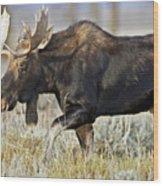 Bull Moose Crossing The Sage  Wood Print