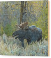 Bull Moose In The Evening Wood Print
