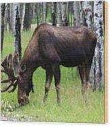 Bull Moose In The Woods  Wood Print