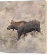 Bull Moose On The Run Wood Print