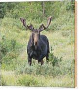 Bull Moose Stands Guard Wood Print