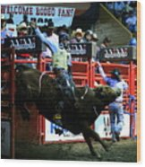 Bull Riding At The Grand National Rodeo Wood Print