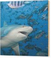 Bull Shark Wood Print