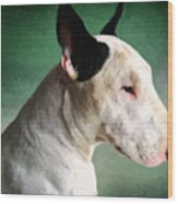 Bull Terrier On Green Wood Print