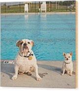 Bulldog And Chihuahua By The Pool Wood Print
