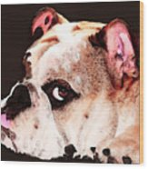 Bulldog Art - Let's Play Wood Print by Sharon Cummings
