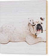 Bulldog Laying Wood Print