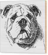 Bulldog-portrait-drawing Wood Print