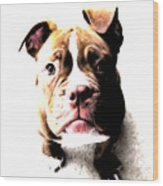 Bulldog Puppy Wood Print by Michael Tompsett