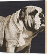 Bulldog Spirit Wood Print