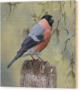 Bullfinch Bird Wood Print