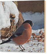 Bullfinch In The Snow Wood Print