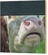 Bull's Eye Peek A Boo Deekflo Wood Print