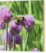 Bumble Bee And Chives Wood Print