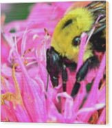 Bumble Bee And Flower Wood Print