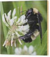 Bumble Bee By The Pond Wood Print