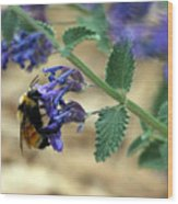 Bumble Bee Delight Wood Print