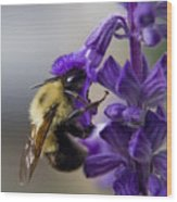 Bumble Bee Doing Lunch Wood Print