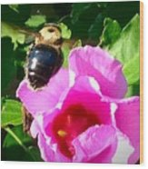 Bumble Bee Flying To Flower Wood Print